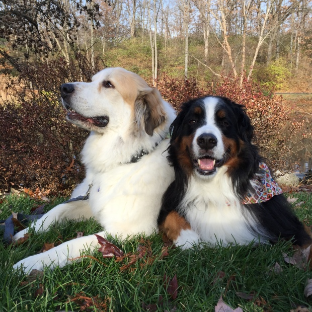 My dogs, Sophie and Bruno enjoy the cool, crisp air too!